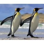 Третья монета с пингвинами