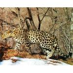 3 новые монеты - леопард, белуга и ибис